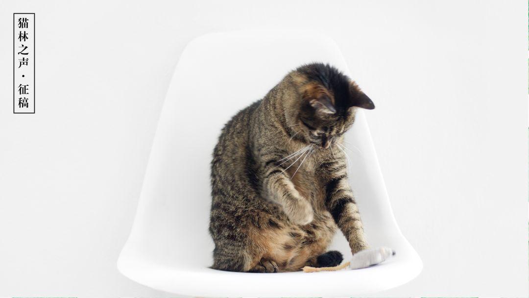 微信公众号【猫林】征稿丨30-200元/篇